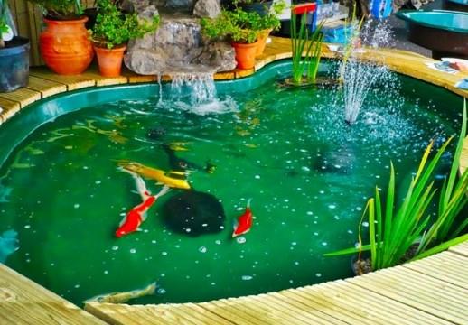 Ciri-Ciri Air Kolam yang Sehat