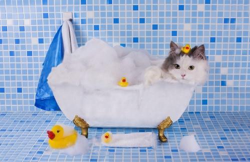 Shampo Kucing Dan Harga Shampo Kucing