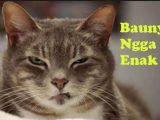 Bau yang Tidak Disukai Kucing