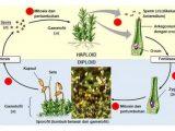 Ciri-Ciri dan Reproduksi Tumbuhan Lumut
