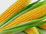 Kandungan Pada jagung