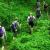 Penjelajahan Hutan