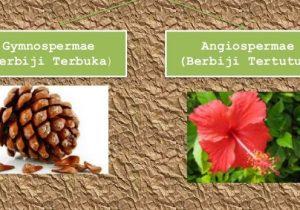 Perbedaan Tumbuhan Biji Terbuka dan Tertutup